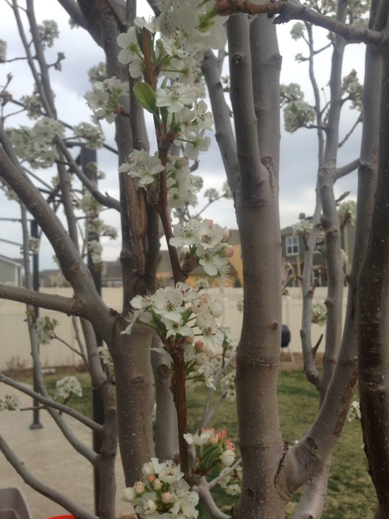 The entire tree exploded in blooms