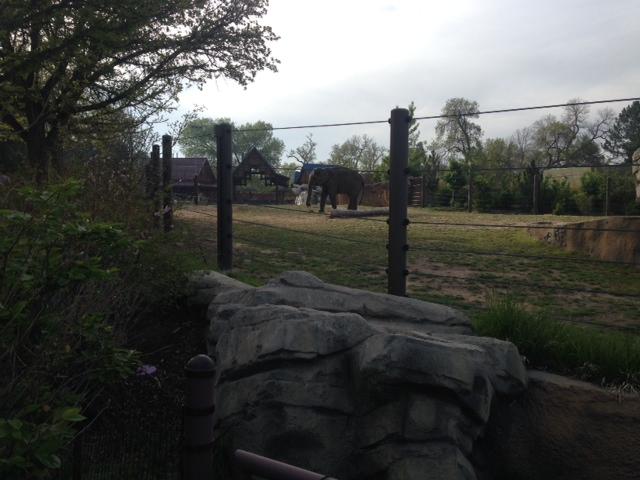 Elephant enjoying her breakfast