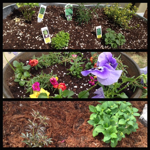 Herbs, Flower Pots, and my new Peony and Hydrangea