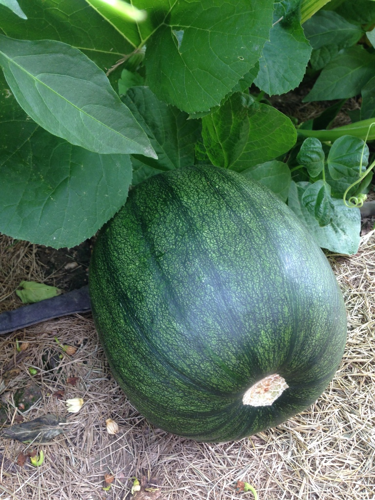 One of the pumpkins that I can actually get to