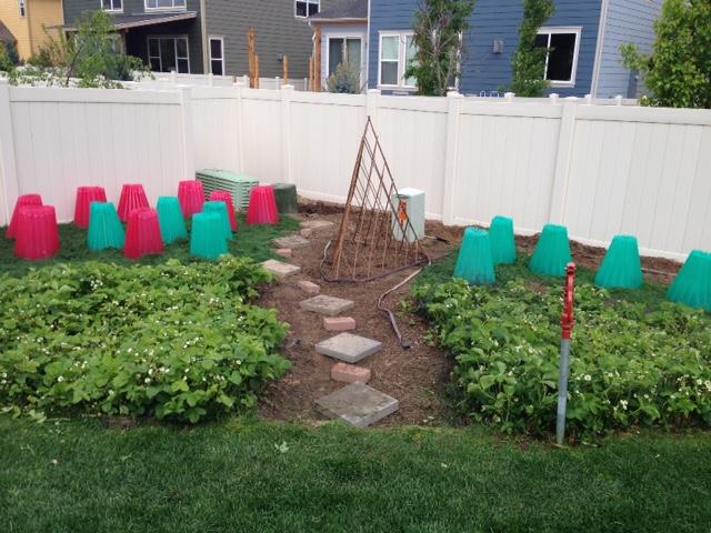 Garden is in!