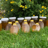 Honey Harvest July 2021…